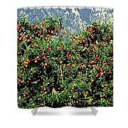 Okanagan Valley Apples Shower Curtain