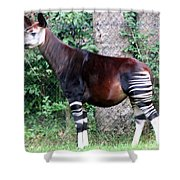 Okapi Shower Curtain