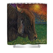 Okeechobee Brahman Shower Curtain