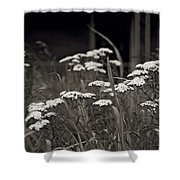 Oklahoma Prairie Flowers Shower Curtain