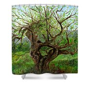 Old Apple Tree Shower Curtain