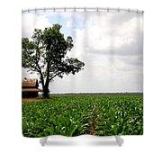 Old Barn In Sugar Cane Field Shower Curtain