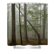 Old Beech Forest Shower Curtain