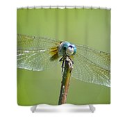 Old Blue Eyes - Blue Dragonfly Shower Curtain