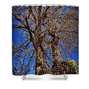 Old Cottonwood Shower Curtain