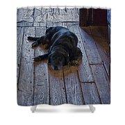 Old Dog Old Floor Shower Curtain