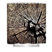 Old Dry Stump Shower Curtain