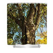 Old Elm Trunk In The Park Shower Curtain