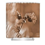 Old Fashioned Wild Flowers  Shower Curtain