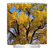 Old Giant  Autumn Cottonwood Shower Curtain