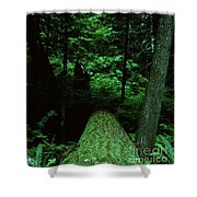 Old Growth Forest At Lost Lake On Mount Hood Shower Curtain