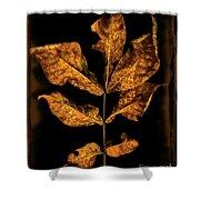 Old Hickory Leaf Shower Curtain