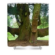 Old Huge Tree Shower Curtain