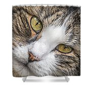 Old Kitty Shower Curtain