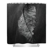 Old Leaf Shower Curtain
