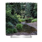 Old Mill Park In Mill Valley Shower Curtain