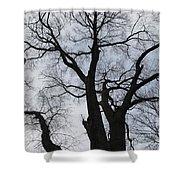 Old Oak Overcast Shower Curtain