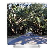 Old Oak Tunnel Shower Curtain