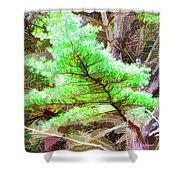 Old Pine Tree 1 Shower Curtain