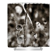 Old Poppies Shower Curtain