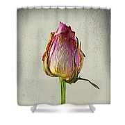 Old Rose On Paper Shower Curtain