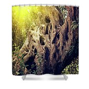 Old Sacred Olive Tree  Shower Curtain