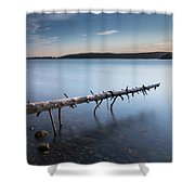 Old Spruce Shower Curtain