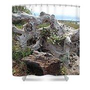 Old Stump At Gold Beach Oregon 4 Shower Curtain