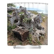 Old Stump At Gold Beach Oregon 5 Shower Curtain