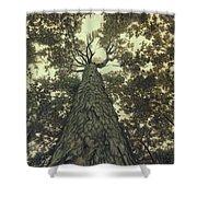 Old Sugar Maple Tree Shower Curtain