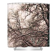 Old Tree 2 Shower Curtain