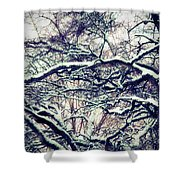 Old Tree 3 Shower Curtain