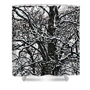 Old Tree 5 Shower Curtain