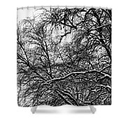 Old Tree 6 Shower Curtain