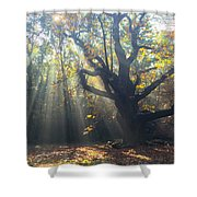 Old Tree And Sunbeams Shower Curtain