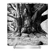Old Tree Ground Up Shower Curtain