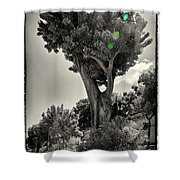 Old Tree In Sicily Shower Curtain