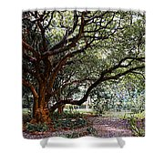 Old Tree Shower Curtain