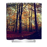 Old Tree Silhouette In Fall Woods Shower Curtain