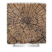 Old Tree Stump Shower Curtain