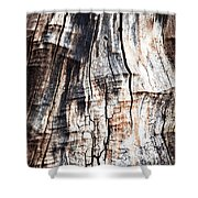 Old Tree Stump Tree Without Bark Shower Curtain