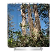 Old Tress  Shower Curtain