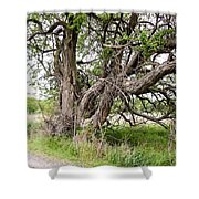 Old Weathered Tree Shower Curtain