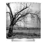 Old Winter Tree Grayscale Shower Curtain