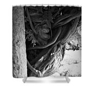 Old Wisteria 2 Shower Curtain