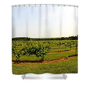 Old York Winery Shower Curtain