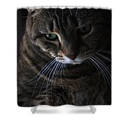 Ole Green Eyes Shower Curtain