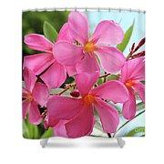 Oleander Maresciallo Graziani 1 Shower Curtain