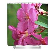 Oleander Maresciallo Graziani 2 Shower Curtain