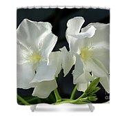 Oleander Mont Blanc 1 Shower Curtain